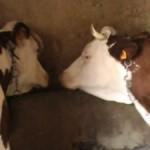 Visite à la ferme d\'Eslous