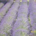 La ferme troglodyte de Saint Rémy de Provence