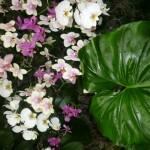 Une semaine sous les tropiques