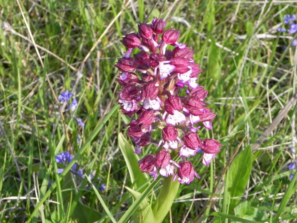 Rando chemin des orchidees simorre blog senioriales - Comment couper orchidee apres floraison ...