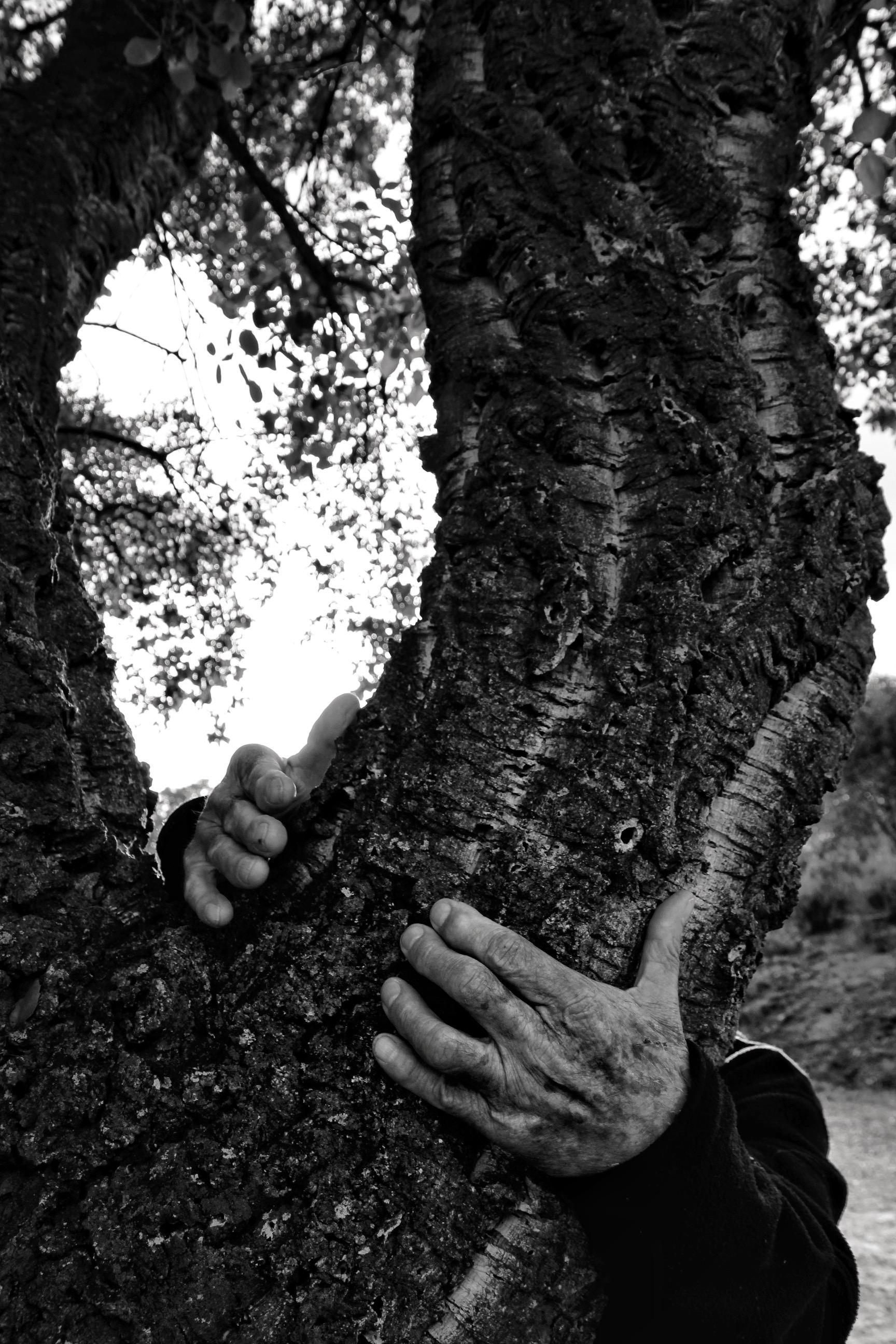 a grasse on aime faire des câlins aux arbres ! vive la sylvothérapie